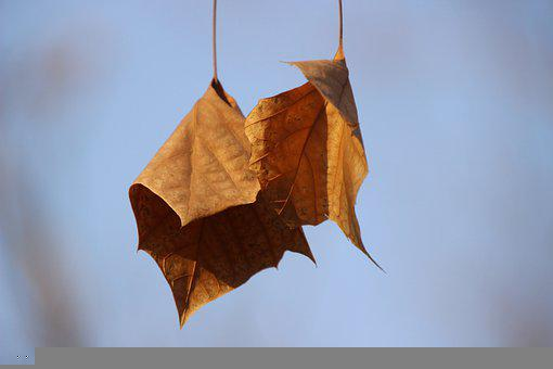Leaves, Brown Leaves, Withered, Plant, Dry Leaves