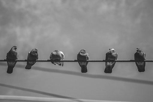 City, Birds, Animal, Pigeons, Plumage, Turkey, Paris