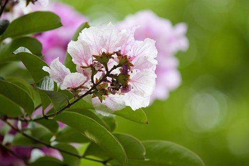 A Flower, Tall, Summer, Purple, Thin Petals