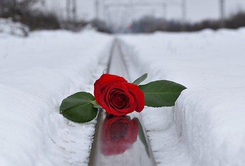 Red Rose, Rail Track, Love Symbol, Remembering, Missing