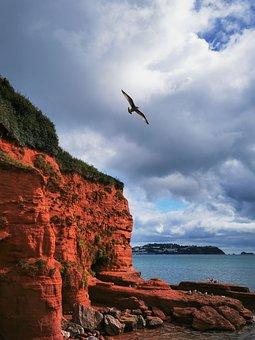 Bird, Rock, Sea, Cliff, Ocean, Shore, Seashore, Coast