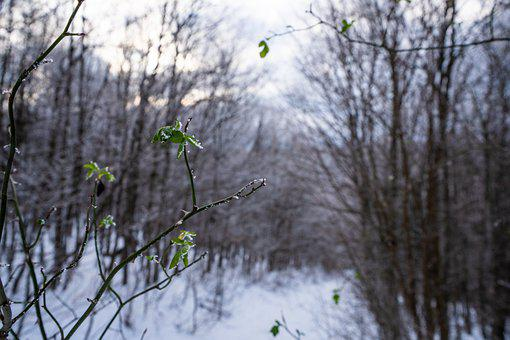 Nature, Leaf, Green, Snow, Cold, Winter