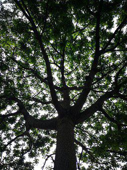 Tall, Green, Tree