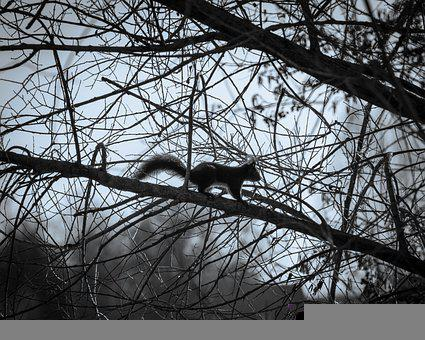 Squirrel, Tree, Branch, Nature, Animal, Rodent, Cute
