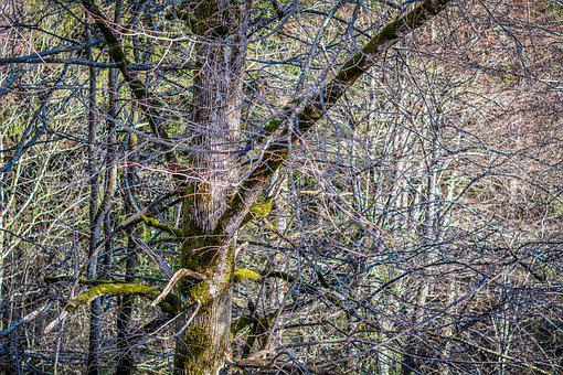 Forest, Trees, Aesthetic, Winter, Nature, Close Up