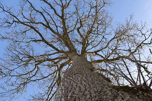 Tree, Leafless Tree, Winter Season, Trunk, Branches