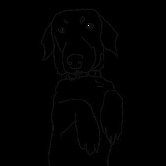 Dachshund, Dog, Animal, Pet, Portrait, Line, Line Art