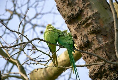 Parakeet, Birds, Branch, Perched, Parrot, Animals