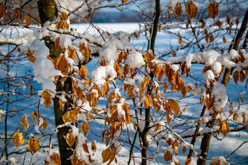 Winter, Forest, Snow, Landscape, Tree, Snowy, Ate