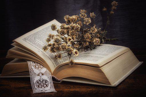 Book, Dried Flowers, Daisies, Bouquet, Reading