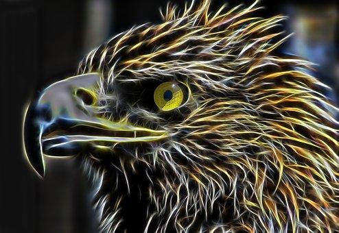 Eagle, Adler, Bird Of Prey, Head, Detail, Raptor