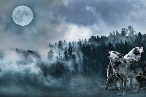 Fantasy, Forest, Wolves, Fog, Moon, Night, Howl