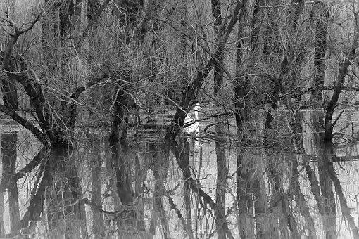 River, Flood, Trees, Reflection, Water, Flooding