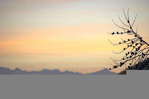 Depth Of Field, Focus, Nature, Mountains, Tree, Branch