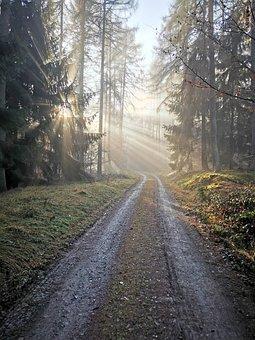 Nature, Forest, Trees, Light, Mist, Tree, Woods, Fog