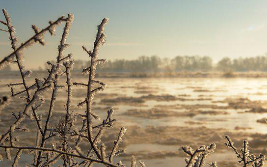 Branches, Frost, Sunrise, Hoarfrost, Ice Crystals, Ice