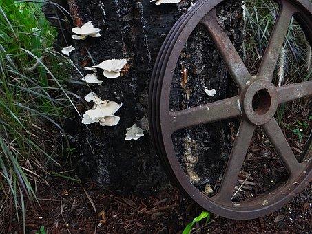 Nature, Mushroom, Fungus, Gear, Wheel, Machine