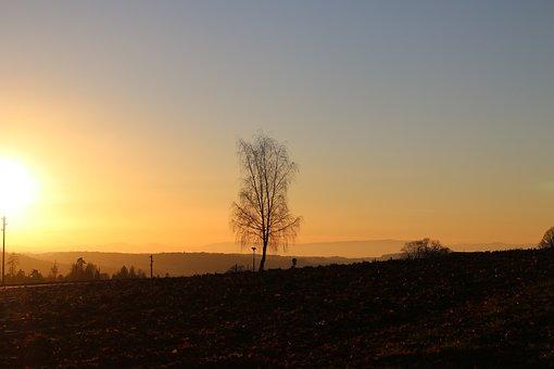 Leaves, Forest, Light, Environment, Landscape, Trees