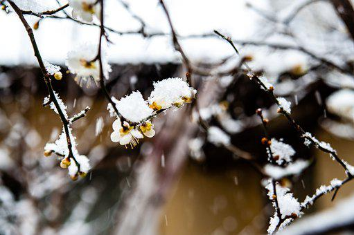 Snow Match, Snow, Winter, Flower, Landscape, Nature