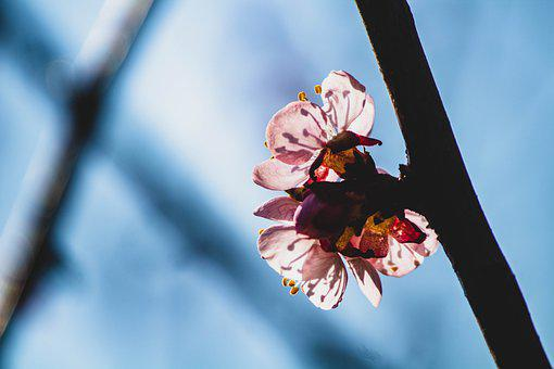 Lines, Bloom, Flower, Line, Blossom, Spring, Flora