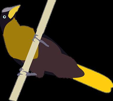 Bird, Cacique, Cacicus, Perched, Nature