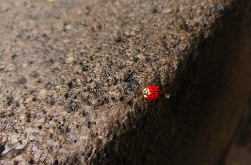 Ladybug, Insect, Spring, Nature, Animal, Fauna