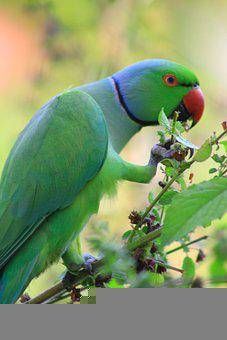 Bird, Parrot, Feathers, Plumage, Colorful, Wildlife