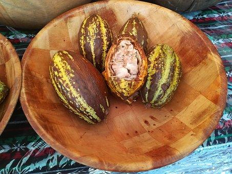 Seed, Chocolate, Raw, Fresh, Theobroma, Pod, Plant