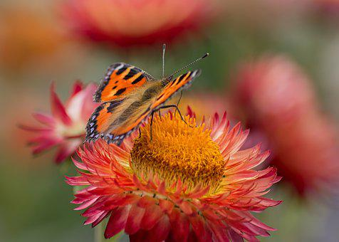 Butterfly, Flower, Pollinate, Pollination, Wings