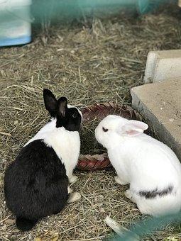 Rabbit, Lapereau, Cute, Nature, Adorable, Animals
