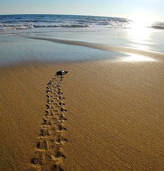 Sea, Ocean, Sun, Turtle, Prints, Footprints, Sand