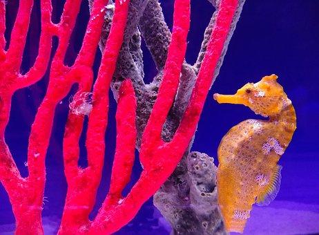 Hippocampus, Sea Horse, Seahorse, Ocean, Sea, Poseidon