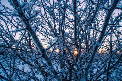 Snow, Trees, Branches, Hoarfrost, Rime, Snowy, Wintry