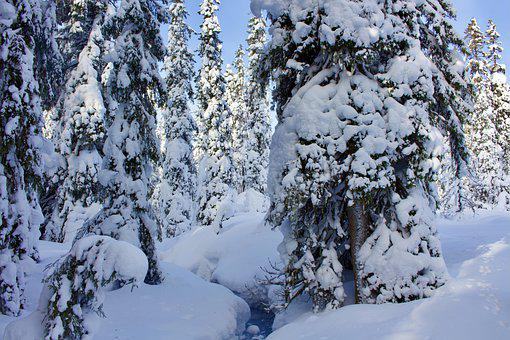 Snow, Forest, Sports Law, Winter, Cold, Snowy, Wintry