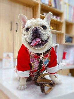 French Bulldog, Dog, Pet, Cute, Bulldog, Animal, Sweet