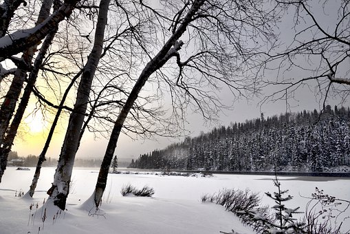 Landscape, Nature, Snow, Winter, Trees, Cold, Birch