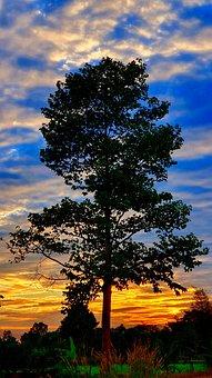 Tree, Twigs, Autumn Leaves, Grass, Dark, Evening