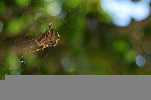 Spider, Nature, Web, Spiderweb, Animal, Insect