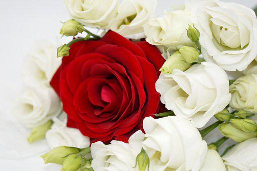 Roses, Bouquet Of Roses, Red Rose, White Roses, Flowers