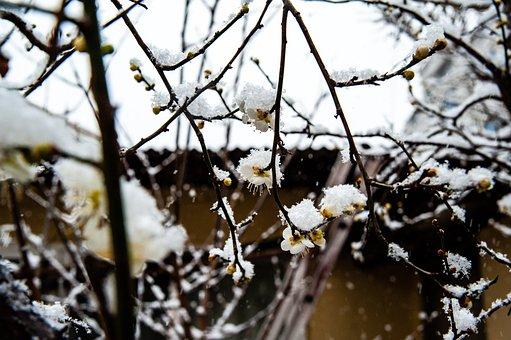 Snow Match, Snow, Winter, Flower, Landscape, Nature