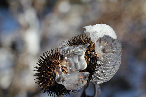 Plant, Withered, Ice, Frozen, Frost, Cold, Winter