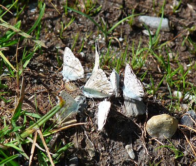 Butterflies, Minerals, Butterfly, Insects, Mud, Nature