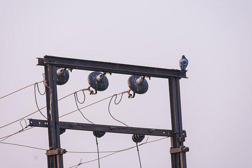 Bird, Pigeon, High, Voltage, Electric, Cable, Wire