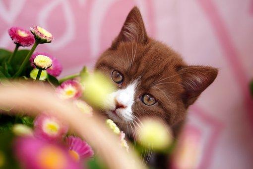 Cat, Feline, Flowers, Whiskers, Pet