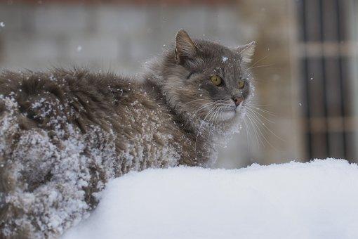 Cat, Snow, Animal, Nature, Cold, Portrait, Mammal, Cute