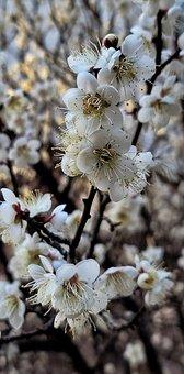 South Korea, Busan, Spring, Flower, Beauty