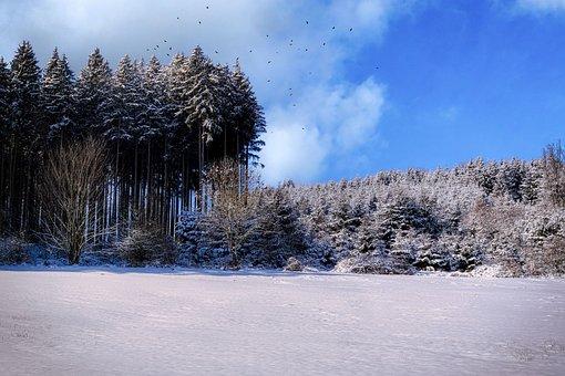 Field, Forest, Frost, Stubble, Snow, Winter, Wintry