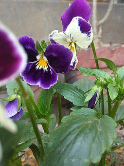 Flower, Garden, Happy, New