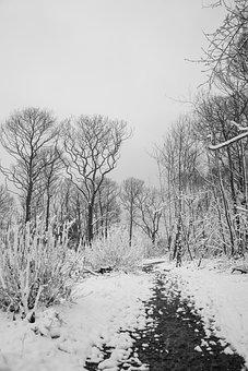 Wrabness, Stour Wood, Rspb, Nature Reserve, Woods, Snow