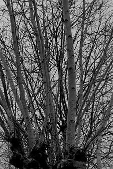 Tree, Trunk, Ramos, Nature, Wood, Winter